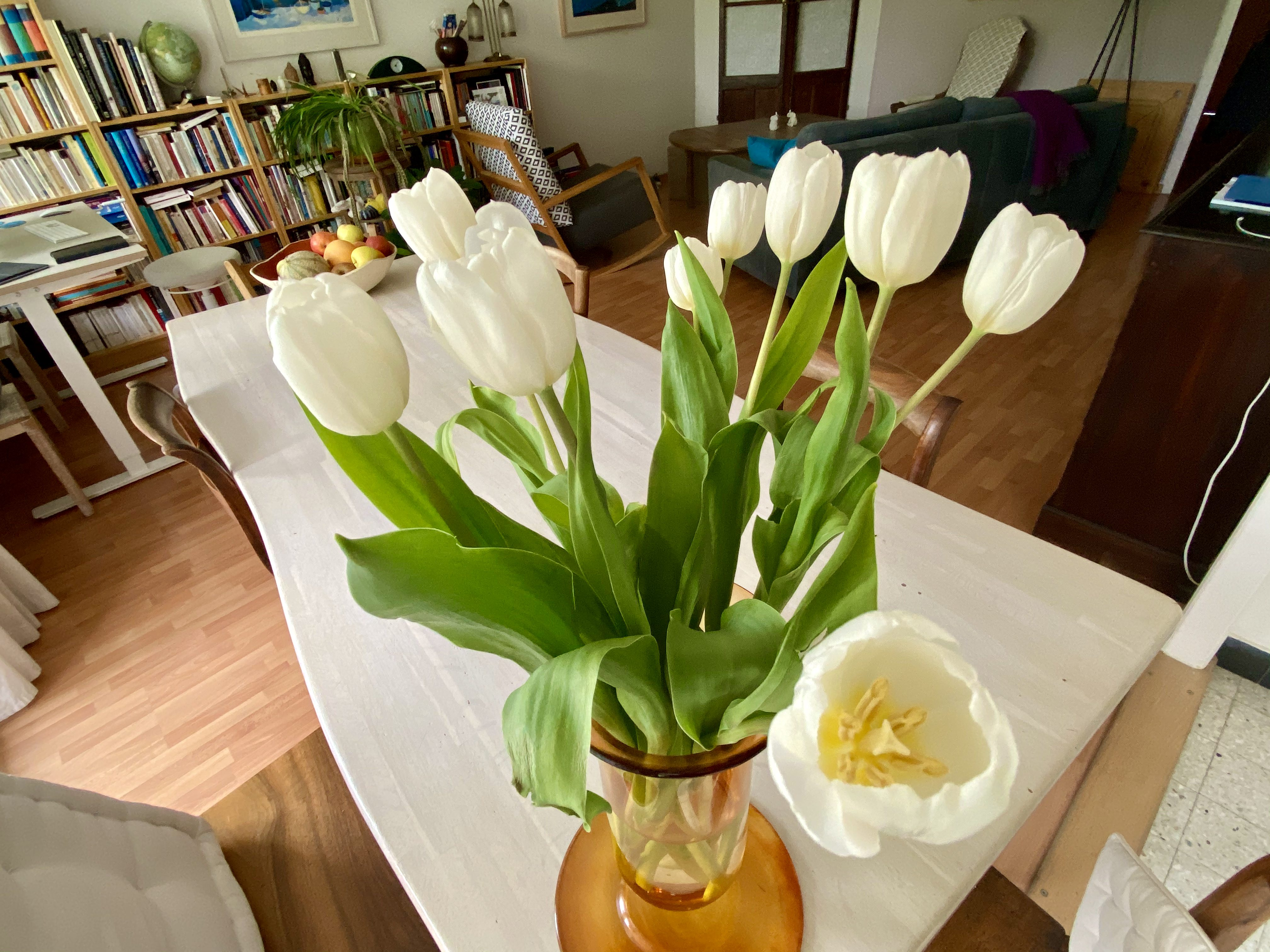 White tulips in a vase on our table